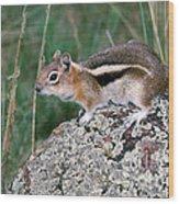 Golden Mantled Ground Squirrel Wood Print