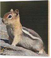 Golden-mantled Ground Squirrel Wood Print