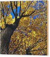 Golden Maple 7 Wood Print