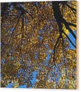 Golden Maple 8 Wood Print