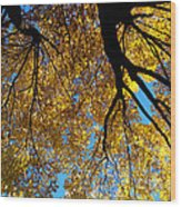 Golden Maple 9 Wood Print