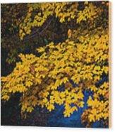 Golden Maples Wood Print