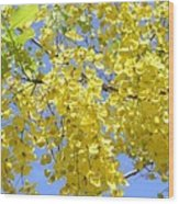 Golden Medallion Shower Tree Wood Print