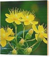 Golden Miracles Wood Print