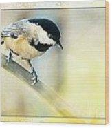 Golden Morning Chickadee Photo Art Wood Print