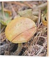 Golden Mushroom Wood Print