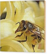 Golden Nectar  Wood Print