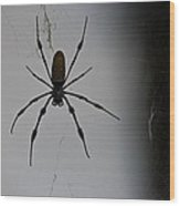 Golden Orb-weaver Wood Print