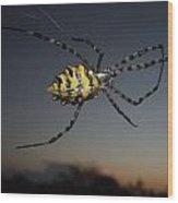 Golden Orb Web Spider Wood Print