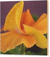 Golden Pansy Wood Print