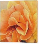 Golden Peach Rose Wood Print