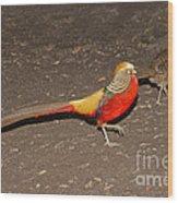 Golden Pheasant Pair Wood Print