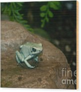 Golden Poison Frog Mint Green Morph Wood Print by Mark Newman