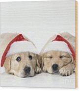 Golden Reriever Puppies, 7 Weeks Old Wood Print