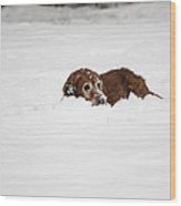 Golden Retreiver Playing In The Snow Wood Print