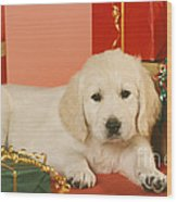 Golden Retriever Amongst Presents Wood Print