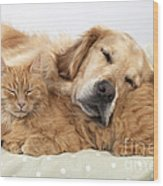 Golden Retriever And Orange Cat Wood Print
