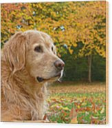 Golden Retriever Dog Autumn Leaves Wood Print by Jennie Marie Schell
