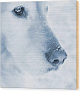 Golden Retriever Dog Snowflakes On My Nose Wood Print