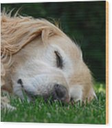 Golden Retriever Dog Sweet Dreams Wood Print