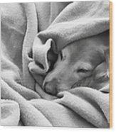 Golden Retriever Dog Under The Blanket Wood Print
