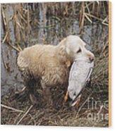 Golden Retriever Dog With Mallard Duck Wood Print