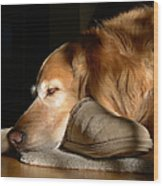 Golden Retriever Dog With Master's Slipper Wood Print by Jennie Marie Schell