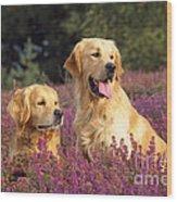 Golden Retriever Dogs In Heather Wood Print