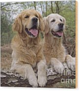 Golden Retriever Dogs Wood Print