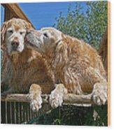 Golden Retriever Dogs The Kiss Wood Print
