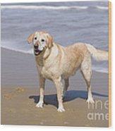 Golden Retriever On Beach Wood Print