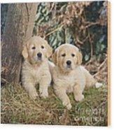 Golden Retriever Puppies In The Woods Wood Print