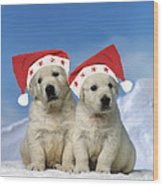 Golden Retriever Puppies Wood Print