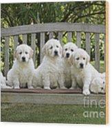 Golden Retriever Puppies Wood Print