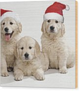 Golden Retriever Puppies With Christmas Wood Print