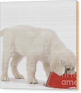 Golden Retriever Puppy Eating Wood Print