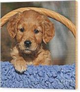 Golden Retriever Puppy In A Basket Wood Print
