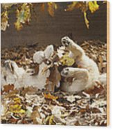 Golden Retriever Puppy In Leaves Wood Print