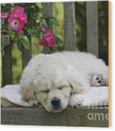 Golden Retriever Puppy Sleeping Wood Print