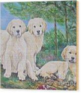 Golden Retriever Puppy Trio  Wood Print