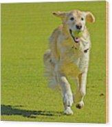 Golden Retriever Running On A Green Wood Print