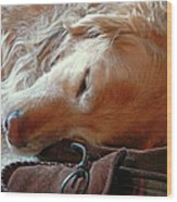 Golden Retriever Sleeping With Dad's Slippers Wood Print by Jennie Marie Schell