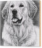 Golden Retriever Spence Wood Print