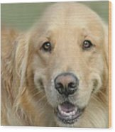 Golden Retriever Standard Wood Print