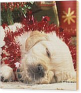 Golden Retriever Under Christmas Tree Wood Print