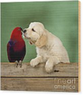 Golden Retriever With Grand Eclectus Wood Print