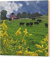 Golden Rod Black Angus Cattle  Wood Print