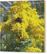 Golden Rod Wood Print by Rosalie Klidies
