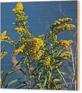 Golden Rods At Northside Park Wood Print