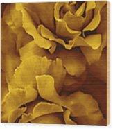 Golden Yellow Roses Wood Print